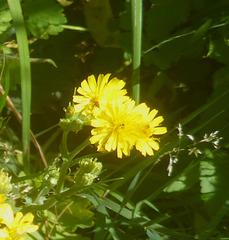 Unbekannte Blüten - nekonataj floroj