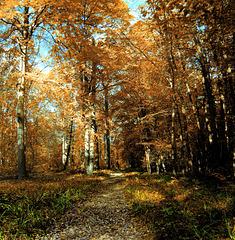 path in fall