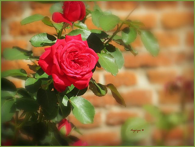 Belle journée à tous ..........!