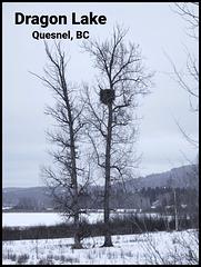 Eagle nest.