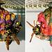 oaw - art by wasps