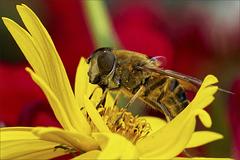 The nectar tastes delicious