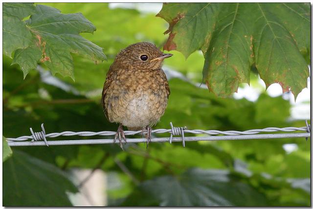 HFF-   Who's a pretty birdie then?