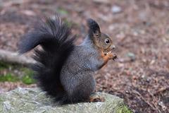 Rencontre avec un écureuil ...