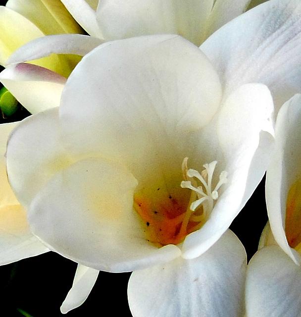Rêves blancs ! White dreams