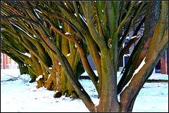 Winter Broom