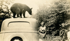 Bear on a Car