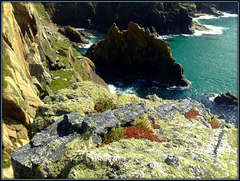 Bosigran Head. Granite, moss and lichen