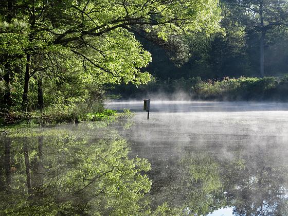 Fog on the pond