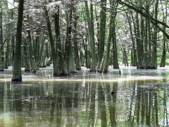 Bluff Lake rookery