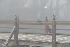 Le pont des soupirs. (1)