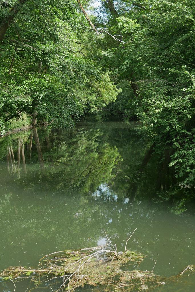 Amazone-sur-Essonne (1)