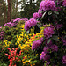 Rhododendron Park Wiefelstede