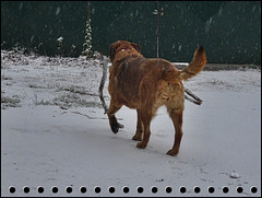 DANA: Un vrai temps de chien ! [ON EXPLORE]