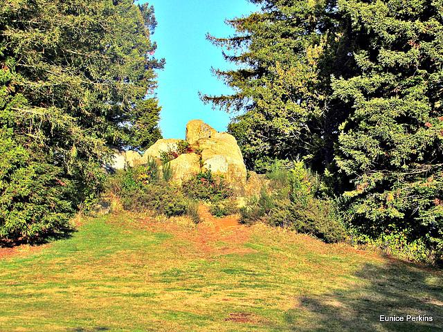Rock Between Two Trees.