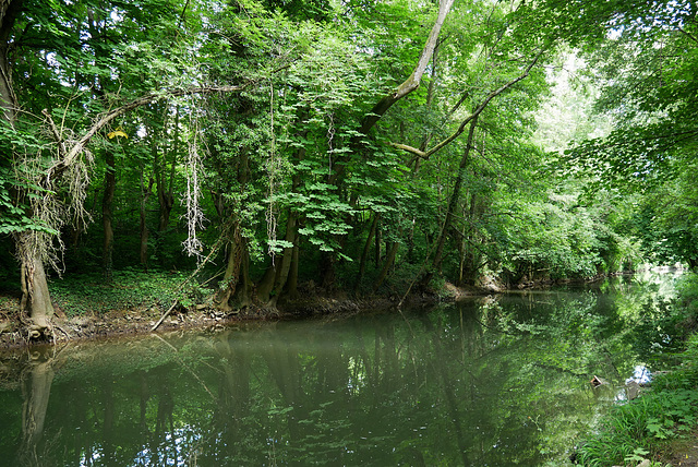 Amazone-sur-Essonne (3)