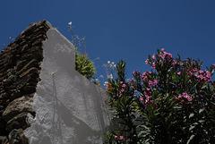 Evoramonte, Alentejo, Nerium oleander