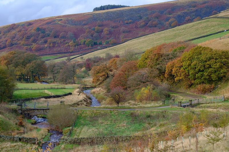 Mossy Lea ... Autumn trees