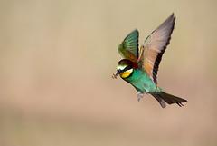 Le vol du chasseur