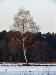 Birkenbaum
