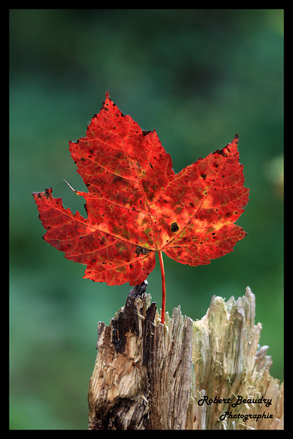 La feuille en automne