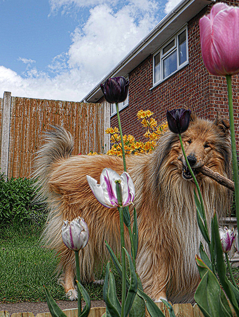 Blake And The Tulips