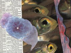 three fisheyes