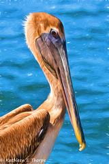Brown Pelican - Topaz Modern Liquid Lines II