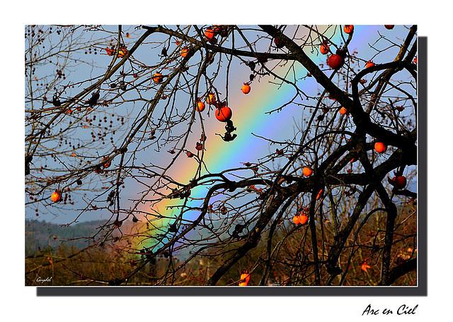 Pluie + Soleil ...