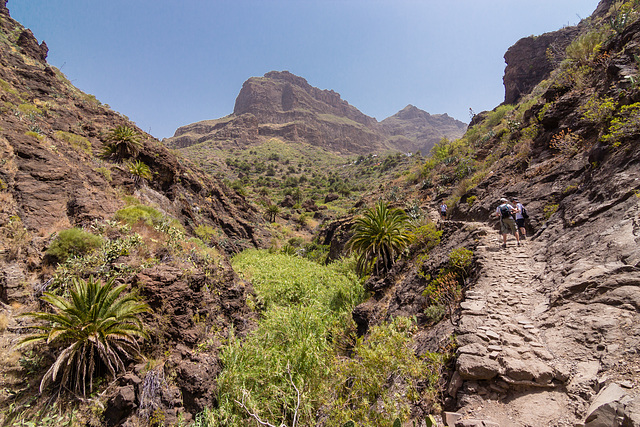 Canary Islands - Tenerife - Barranco De Masca