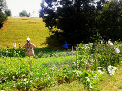 Scarecrows in kailyard - PiPs