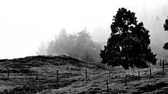 Stille im Nebel 1600 x 900