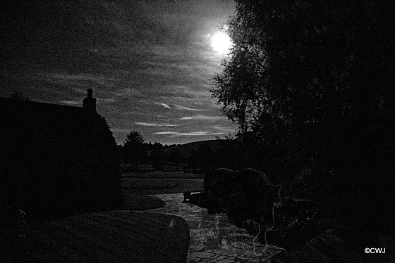 Is the moonlight playing tricks on me or can anyone else see the faint image of a horse coming up the path to what used to be the farm stables?
