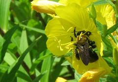 Pollen !