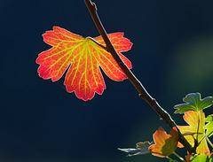 Ich glaube es wird Herbst....PiP!