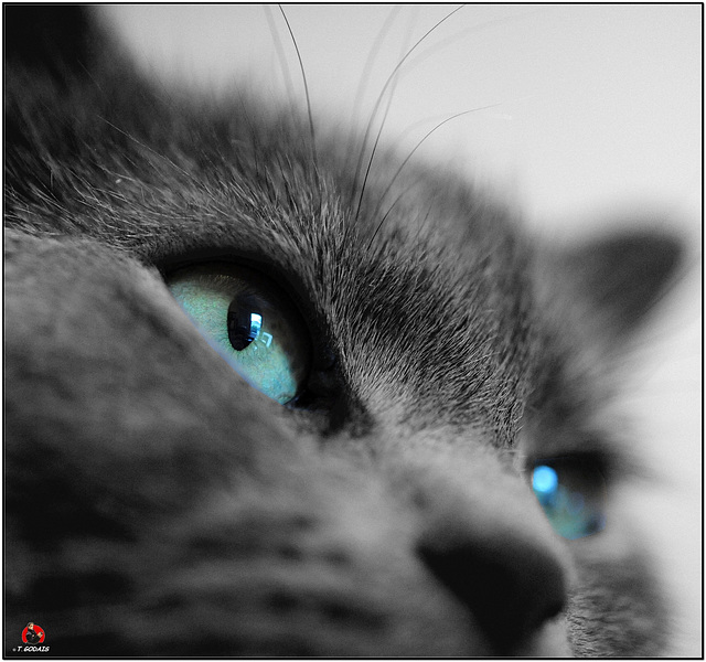 Blue Gotan
