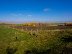 Alberta Farms