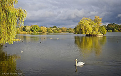 Island and Swan