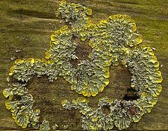 Luscious Little Lichen Landscapes!!