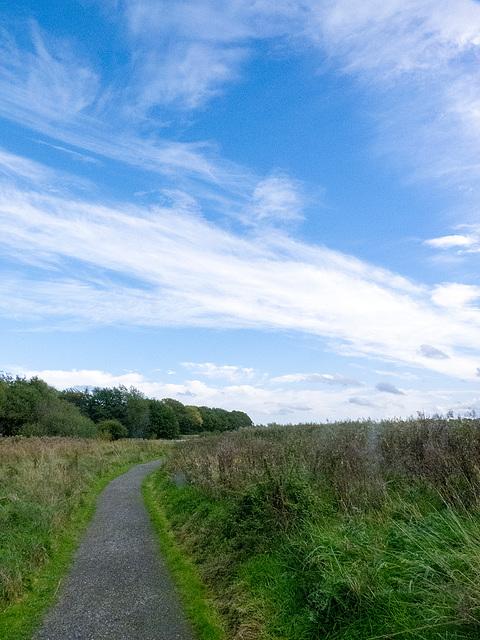 Wetland reedbeds