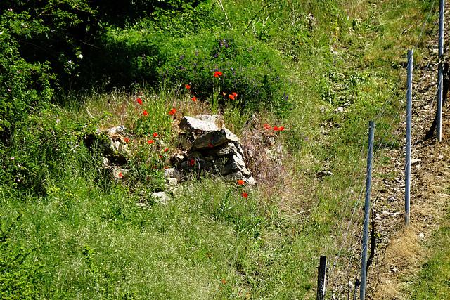 Der Rest eines Weinbergs - The remains of a vineyard - HFF