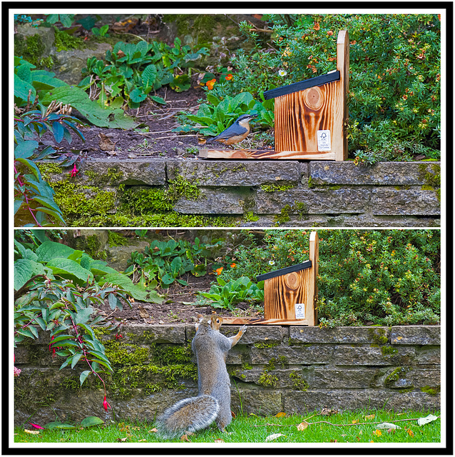 Err, just a minute This is a SQUIRREL feeder you know