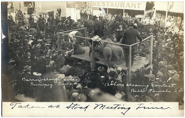 UNT0017 13. SHEEP SHEARING CONTEST BELLE FOURCHE S.D.