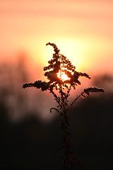 Sonnenuntergang und Abendrot