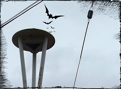Bats leaving the belfry