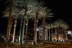Israel, Eilat, Palm Grove at Night