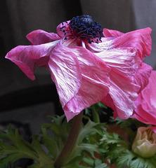 ...valse des fleurs...