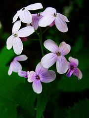 2 (11)..flowers austria