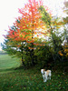 Archie enjoyed the fall colors
