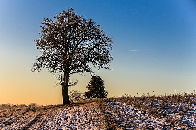 Morgenlicht - Morning Light (195°)